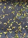 Fond d'automne feuilles tombées des arbres Humeur d'automne - tristesse légère photographie stock