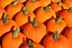 Fond d'automne Potirons colorés Photographie stock libre de droits