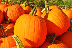 Fond d'automne Potirons colorés Image libre de droits