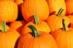 Fond d'automne Potirons colorés Photos libres de droits