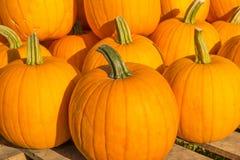 Fond d'automne Potirons colorés photo libre de droits