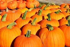 Fond d'automne Potirons colorés Images libres de droits