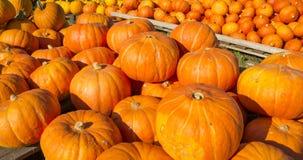 Fond d'automne Potirons colorés photos stock