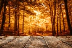 Fond d'automne, table en bois au-dessus de la forêt defocused photographie stock