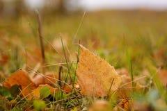 Fond d'automne Une feuille jaune sur l'herbe photos stock