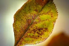 Fond d'Autumn Leaf Detail On Blurred image stock