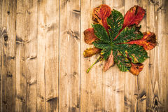 Fond d'Autumn Leaf On Worn Wood Photos libres de droits