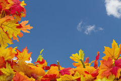 Fond d'Autumn Leaves et de potirons Images libres de droits