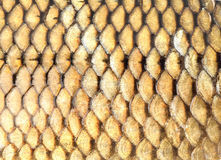 Fond d'or d'échelles de poissons Image libre de droits