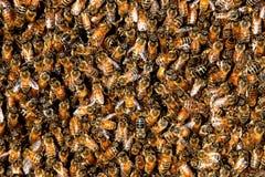 Fond d'essaim d'abeille de miel Photo stock