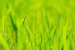 Fond d'herbe Image stock