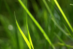 Fond d'herbe Photo stock