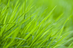 Fond d'herbe Photographie stock
