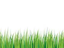 Fond d'herbe Photo stock