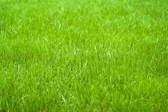 Fond d'herbe Images libres de droits