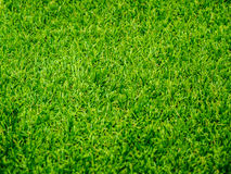 Fond d'herbe photos stock