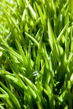 Fond d'herbe images stock