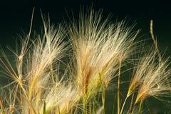 Fond d'herbe d'automne Photo stock