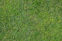 Fond d'herbe de Bermudes Photographie stock libre de droits