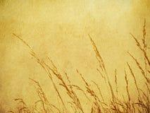 Fond d'herbe de Brown Photo libre de droits
