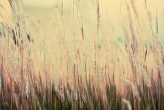 Fond d'herbe de fleur de vintage Photo libre de droits