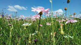 Fond d'herbe de ressort avec les fleurs et l'herbe image stock