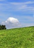 Fond d'herbe et de ciel Images stock