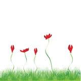 Fond d'herbe, fleurs rouges Photo stock
