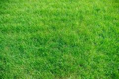 Fond d'herbe verte photographie stock libre de droits