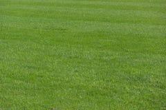 Fond d'herbe verte images libres de droits