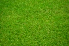 Fond d'herbe verte Images stock