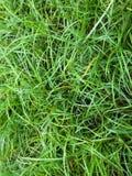 Fond d'herbe verte Photos stock