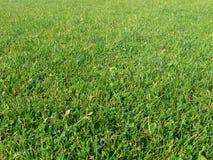 Fond d'herbe verte Image libre de droits