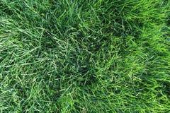 Fond d'herbe verte Photos libres de droits
