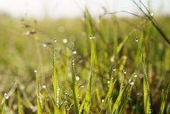 Fond d'herbe verte avec des baisses de rosée aux feuilles Photographie stock