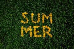 Fond d'herbe verte avec des pissenlits Lettrage d'?t? photo libre de droits