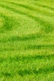 Fond d'herbe verte avec des pistes Photographie stock libre de droits