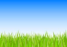 Fond d'herbe verte et de ciel Photo stock