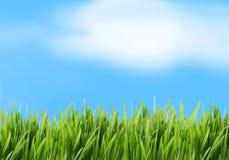 Fond d'herbe verte et de ciel bleu Image stock