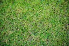 Fond d'herbe verte, fond approximatif vert de texture Photographie stock