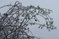 Fond d'hiver de glaçons de fleur Image libre de droits