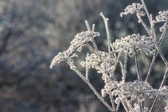 Fond d'hiver de glace et de gel sur des usines Photographie stock