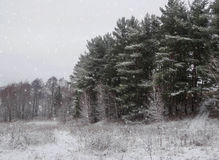 Fond d'hiver de Noël avec la neige et les arbres images stock