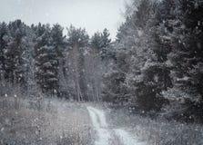 Fond d'hiver de Noël avec la neige et les arbres Photographie stock libre de droits
