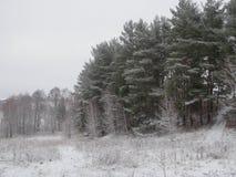 Fond d'hiver de Noël avec la neige et les arbres photos stock