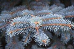 Fond d'image épineux de branche d'arbre image stock