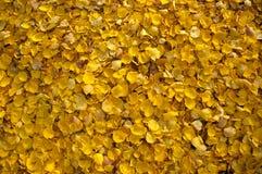 Fond d'image coloré des feuilles d'automne tombées photos stock