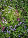 Fond d'image des fleurs décoratives dans le jardin images stock