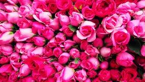 Fond d'image des roses roses images stock