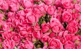 Fond d'image des roses roses photos stock